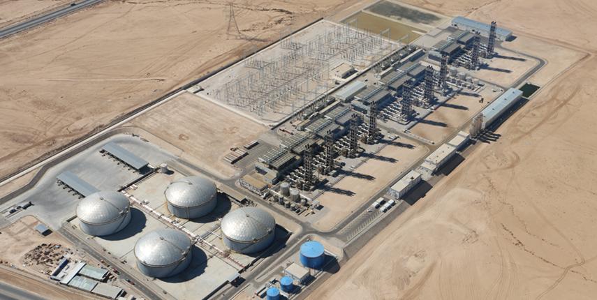 IPP3_whole_plant