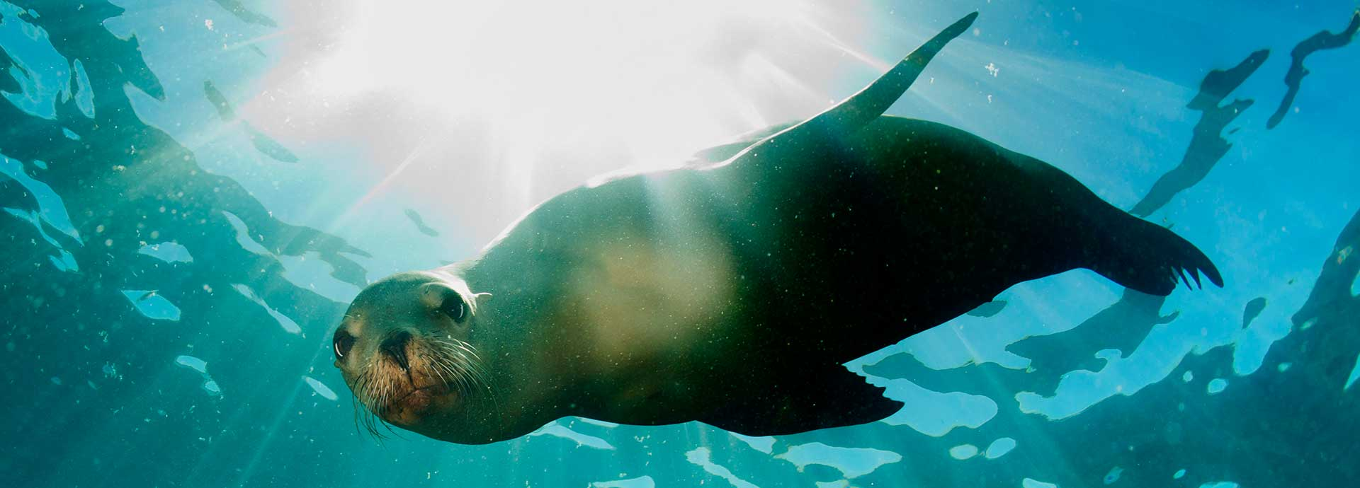 At the forefront of preserving marine life