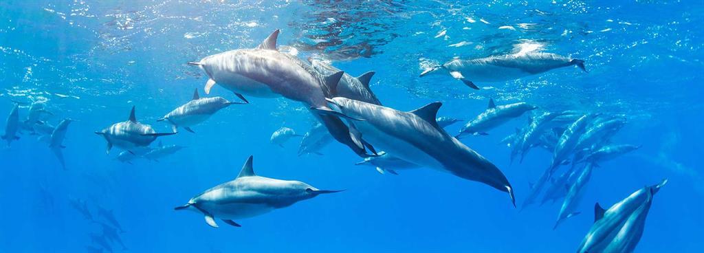 Battling noise pollution underwater